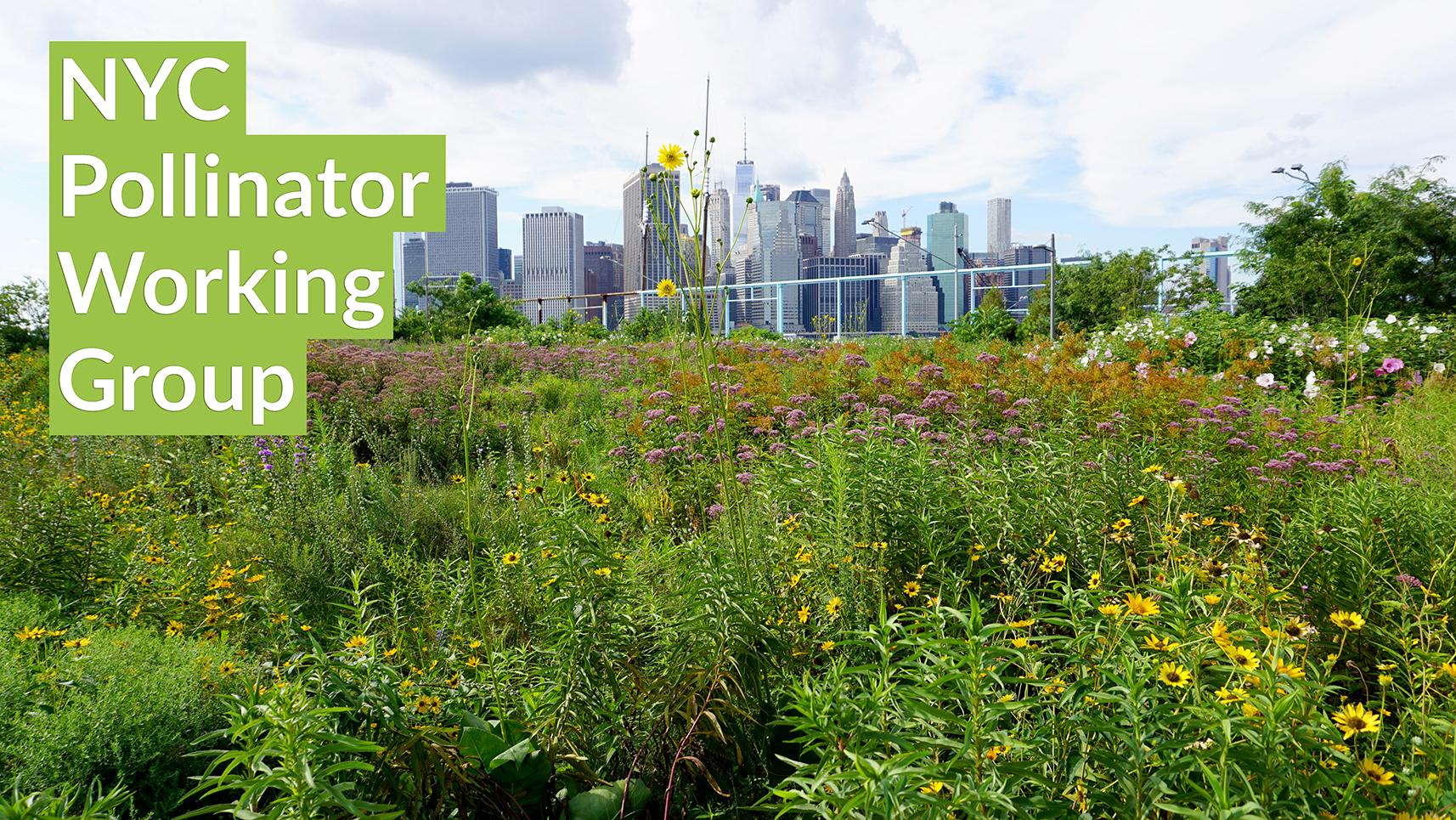 Brooklyn Bridge Park Pier 6 Flower Field, photo by: Jennifer Nitzky